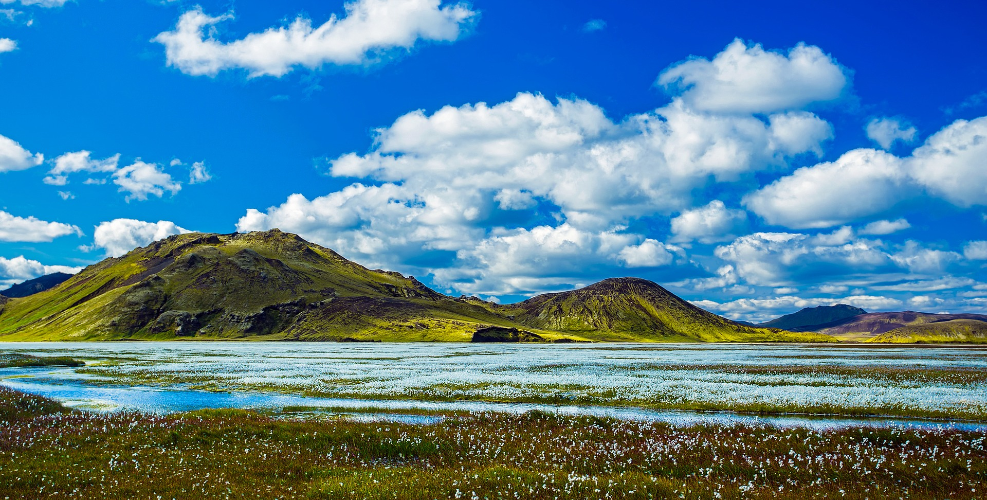 meadow in Iceland