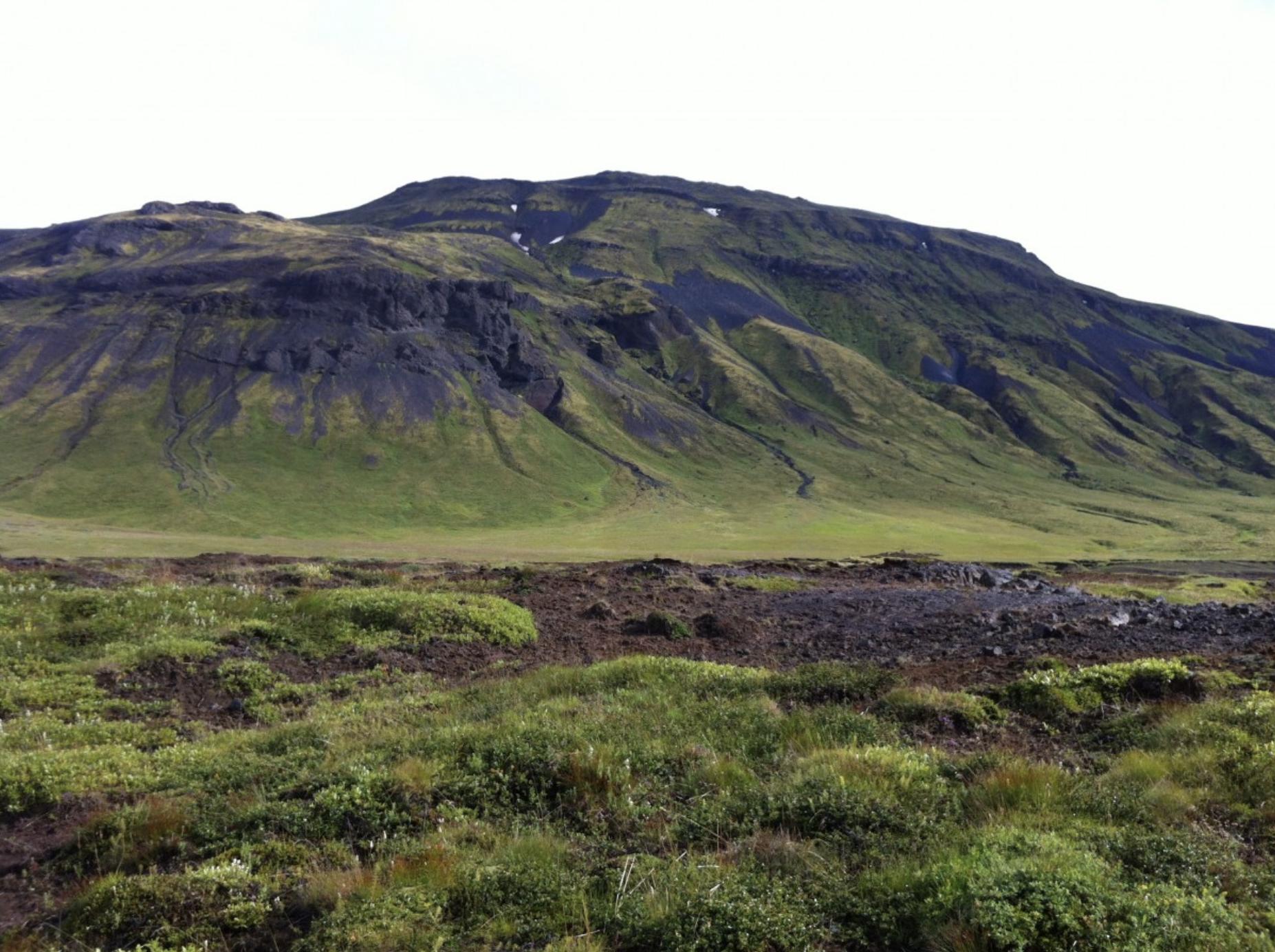 Tundra, Iceland, Icelandic, nature, vegetation, landscape