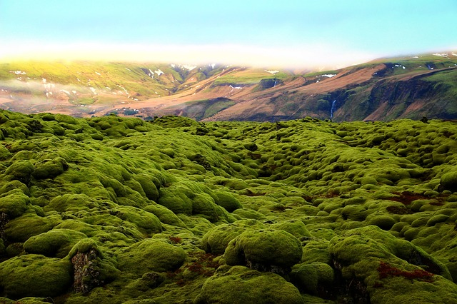 Iceland has green moss