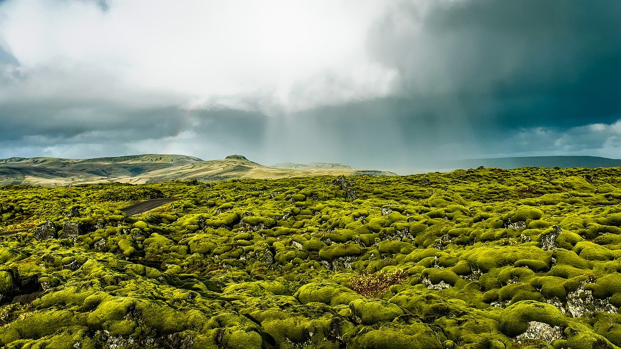 Iceland moss and lava